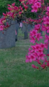 flag-in-graveyard